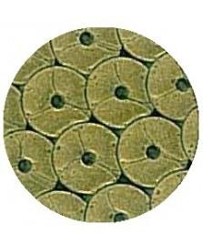 Termoadesivo Spangle